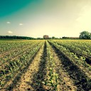 Agriculture has big role to play in curbing greenhouse gas emissions